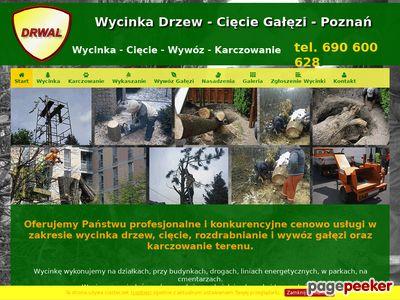 Wycinka drzew Poznań