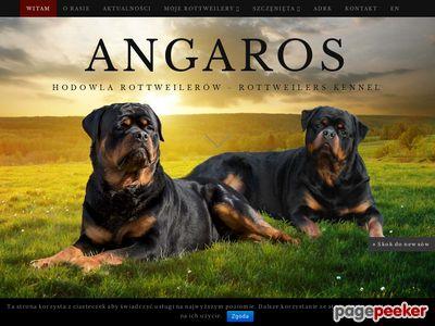 Hodowla rottweilerów Angaros