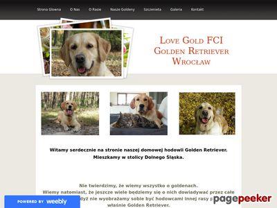 Love Gold Hodowla psów Golden Retriever Wrocław