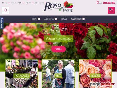 Róże z licencją