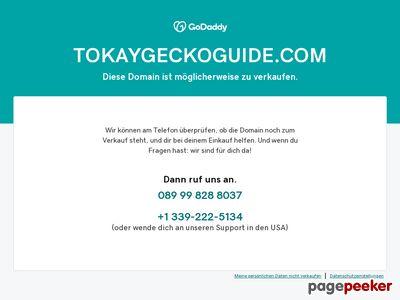 Tokay Gecko Lizard Care Information