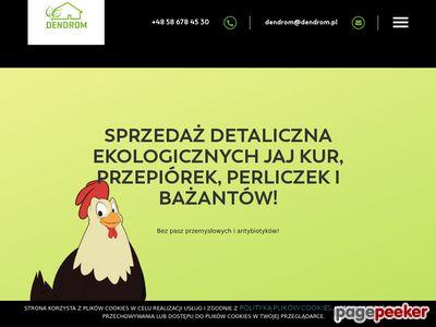Zajęcia ekologiczne dla dzieci - Dendrom