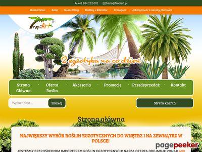 Palmy - TropiArt.pl