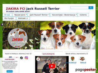 ZAKIRA hodowla FCI psów rasy Jack Russell Terrier