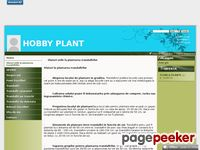 Hobby Plant – pepiniera butasi trandafiri si pomi fructtiferi