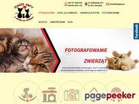 Przytulny hotel dla kotów Małopolska