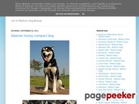 List of Medium Dog Breeds