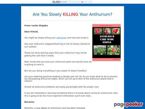 Anthurium Care Made Simple