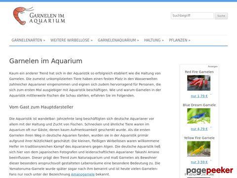 Garnelen im Aquarium - Tipps zur Haltung von Garnelen