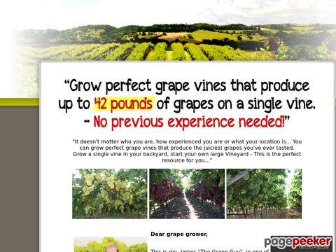 My-grape-vine.com